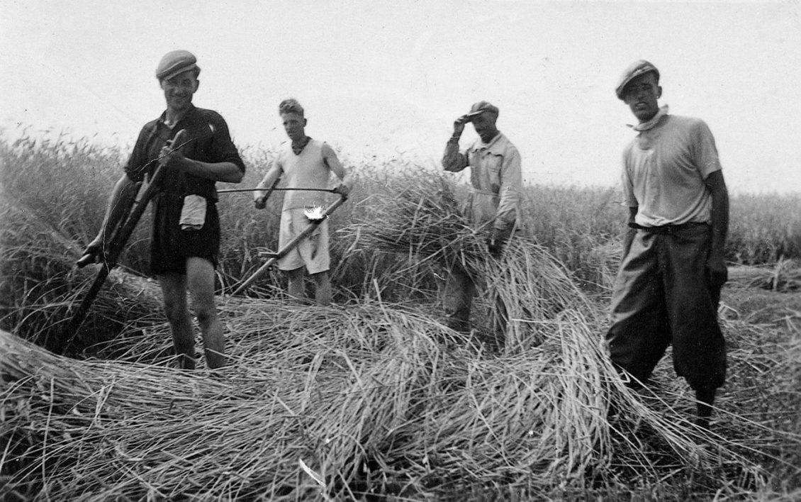 Cavedale landarbeiter
